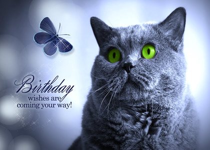 Cat Birthday Card By St George Salon Of Art Llc Handmade For – Birthday Cards Cats